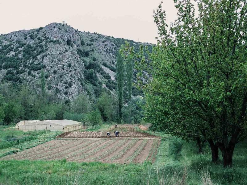 Bosnien, Gemüseanbau