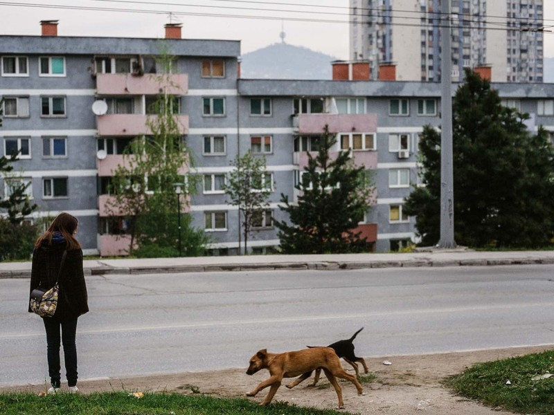 Sarajevo, Frau und Hunde